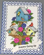 Prayer, Bird Condo
