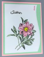 Special, Sisters, Pink Zinnia
