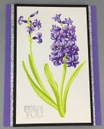 Thinking of You, Hyacinth Purple